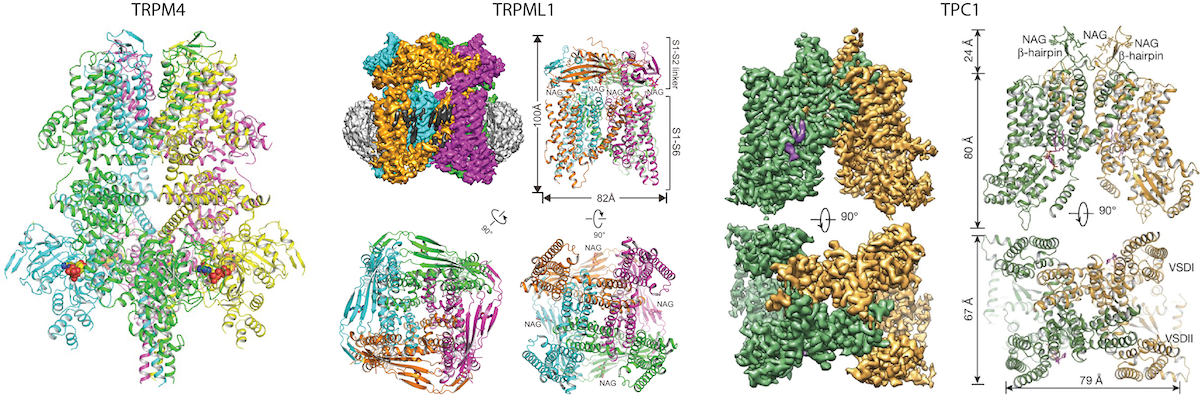 Structural studies of ion channels and transporters